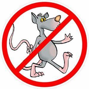 no rats 1